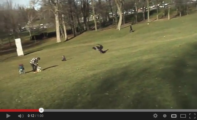 It looks like a large bird of prey is about to grab a toddler in a park