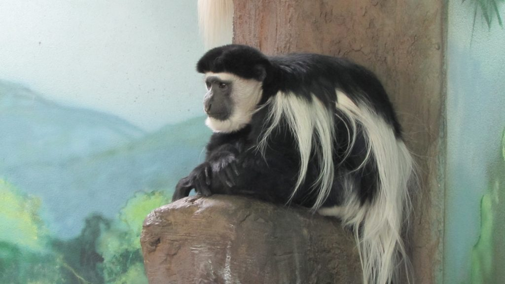 monkey at the Hogle Zoo in Salt Lake City