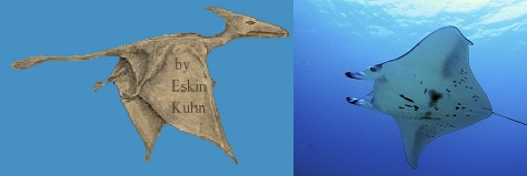 Long-tailed pterosaur of Cuba (left) and photo of a Manta ray fish (right)