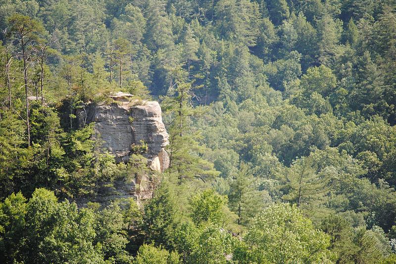 Wilderness area, Daniel Boone National Forest, Kentucky