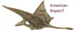 possible ropen pterosaur seen in Cuba